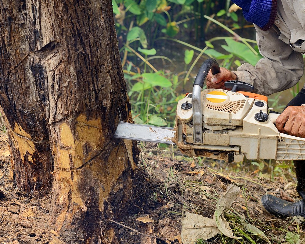 Tree Service Pittsburgh - Tree Removal