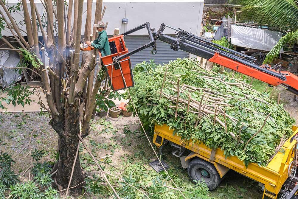 Tree Service Pittsburgh - Tree Pruning