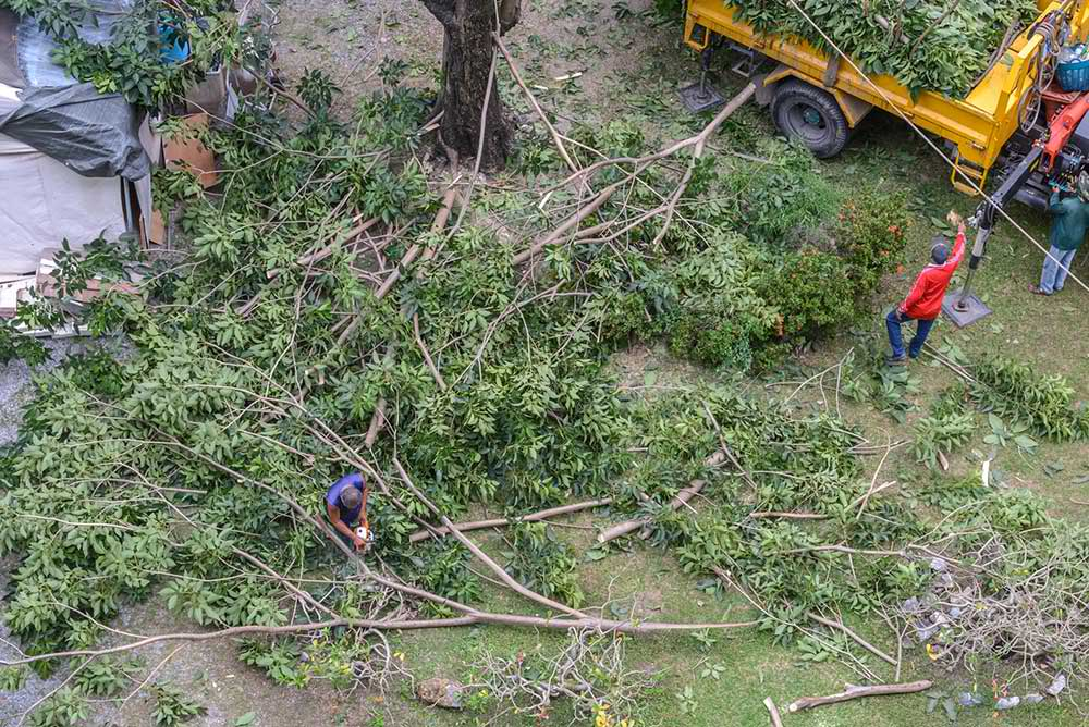 Tree Service Pittsburgh - Tree Trimming